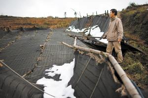 2013年年末,文山开始下雪。许多七农措手不及,遮阳棚大面积被压垮,紧随其后的霜冻更是让三七受灾严重