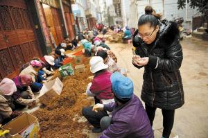 2014年元旦,王凌松一家过得并不安逸。男人去地里挖三七,女人则在帮忙挑拣