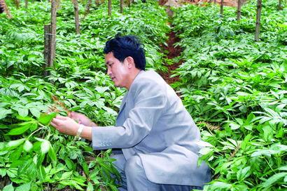三七种植之三七的生长习性