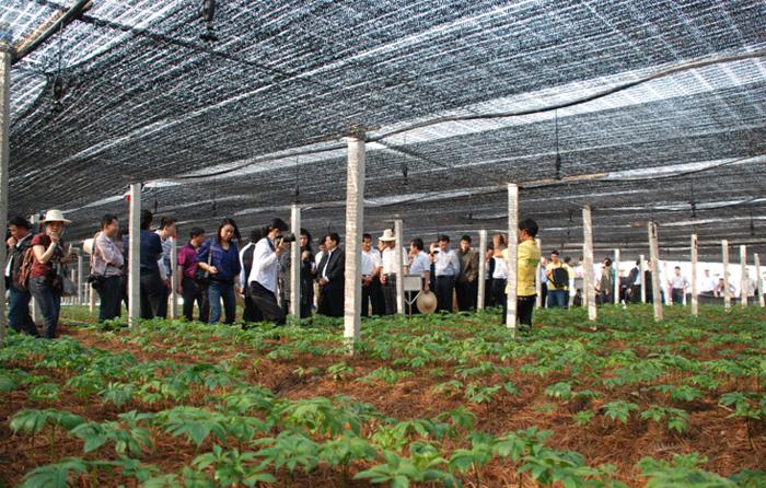 文山三七产业的发展与文化