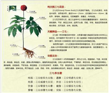三七花有效防治排毒抗辐射