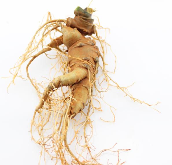 文山种植的三七具备药材的地道性