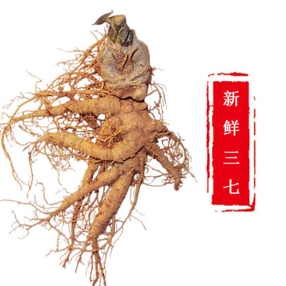 田七是云南的著名特产