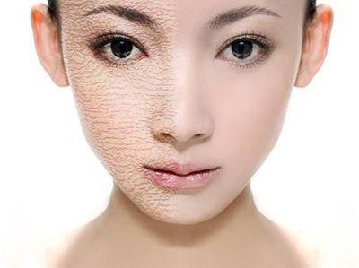 三七增强肌肤稀薄呼吸作用