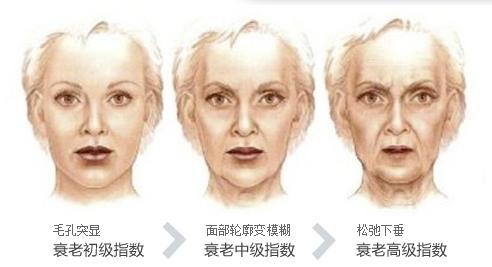 三七预防多种疾病的发生及衰老