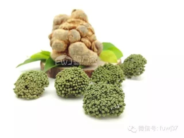 三七花可以治疗高胆固醇血症及其