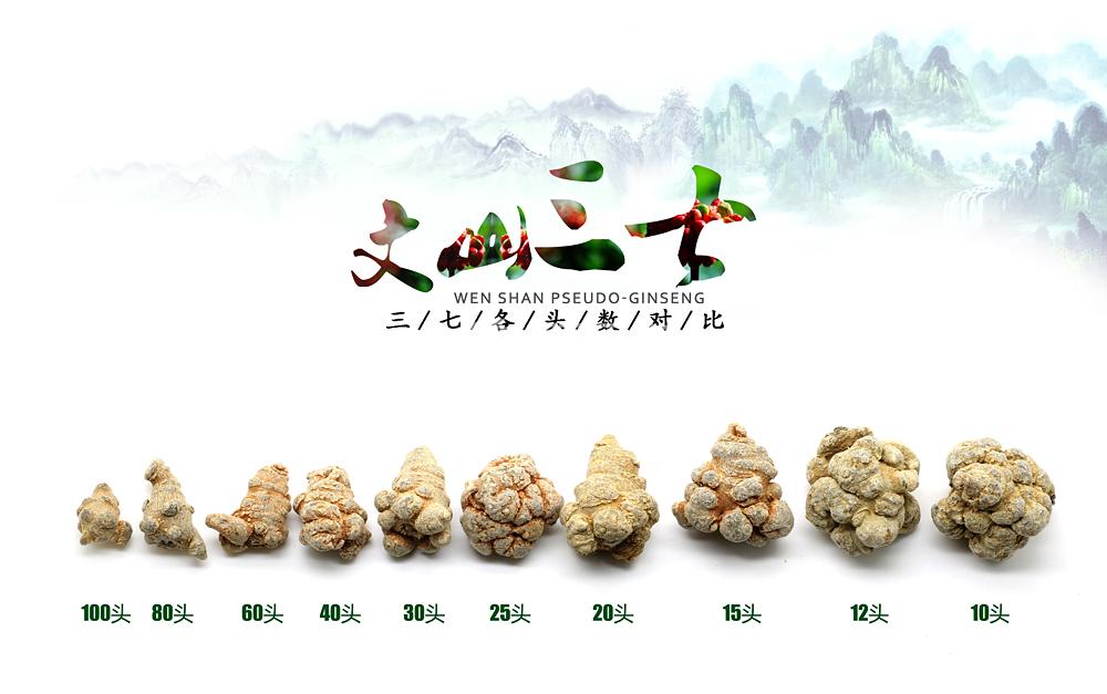 文山三七成为全国首届中药材资源