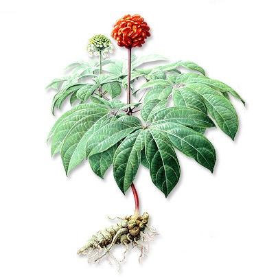 《文山州三七种植技术规程》等