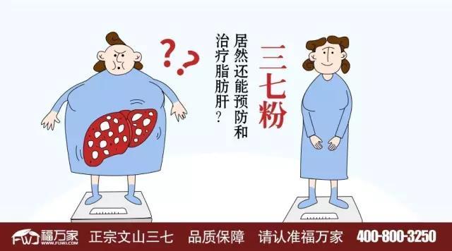 三七粉,居然还能预防和治疗脂肪