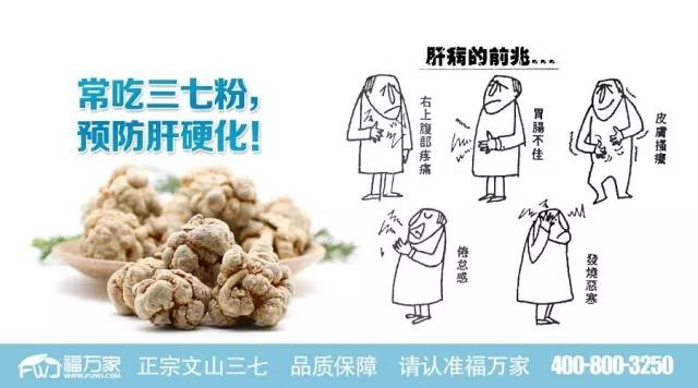 常吃三七粉,预防肝硬化!
