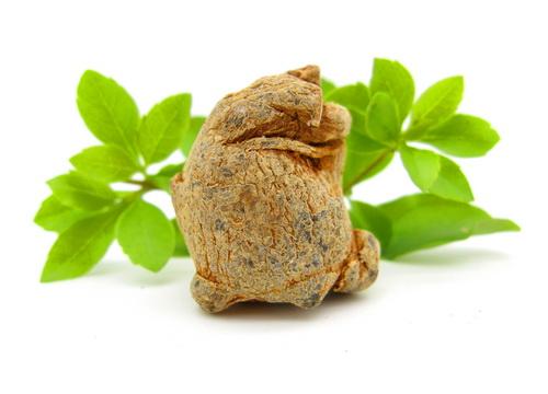 三七总皂苷对阿霉素致心肌损伤保护作用的研究