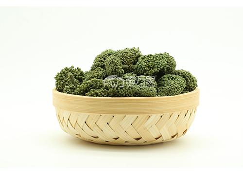 三七花的植物形态与功效作用介绍